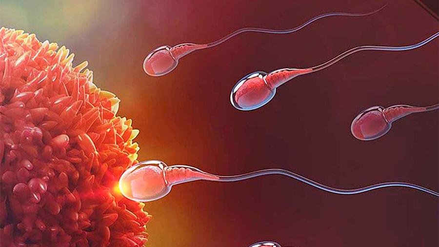 Estudian investigadores de la UNAM espermatozoide en 3D para anticonceptivos