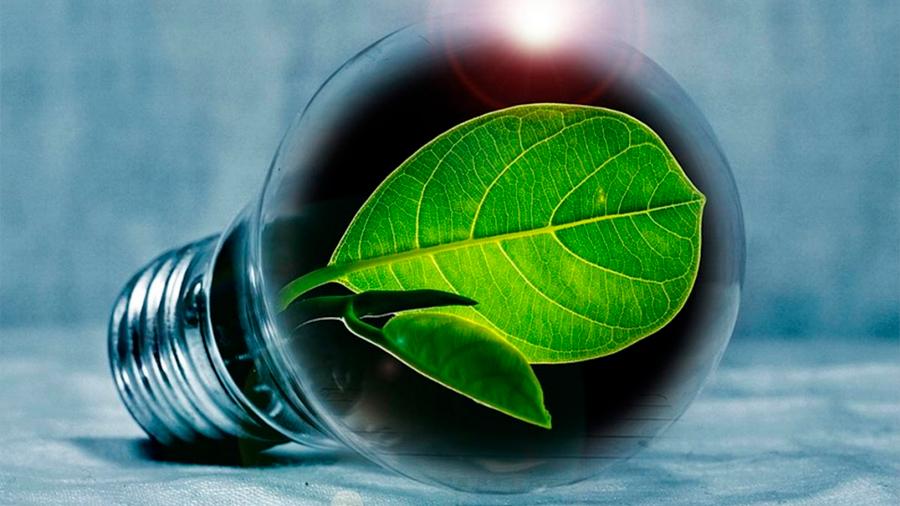 Estudiantes mexicanos generan electricidad a través de plantas
