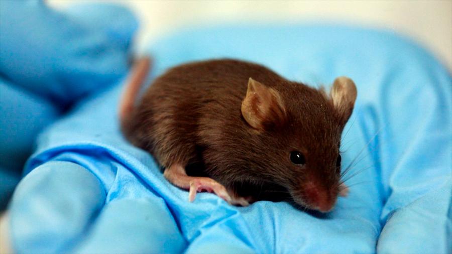 Nanopartículas curan con éxito médulas de ratones lesionadas y reducen la inflamación