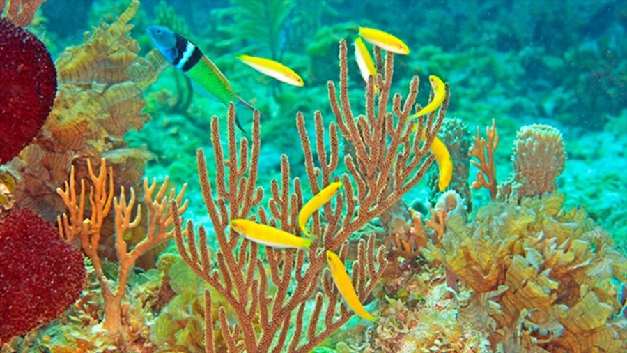Estudio revela secretos del cambio de sexo en los peces, que podría tener implicaciones médicas