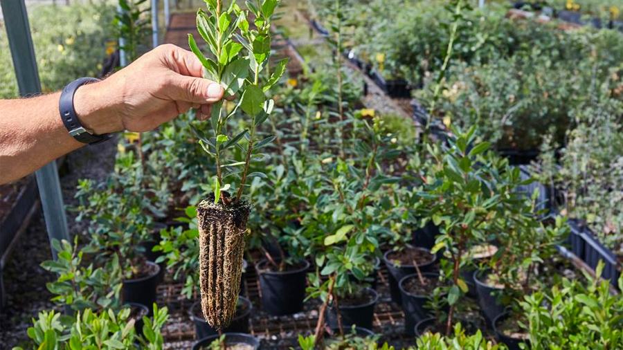 Un gen ayudará a desarrollar plantas para combatir el cambio climático