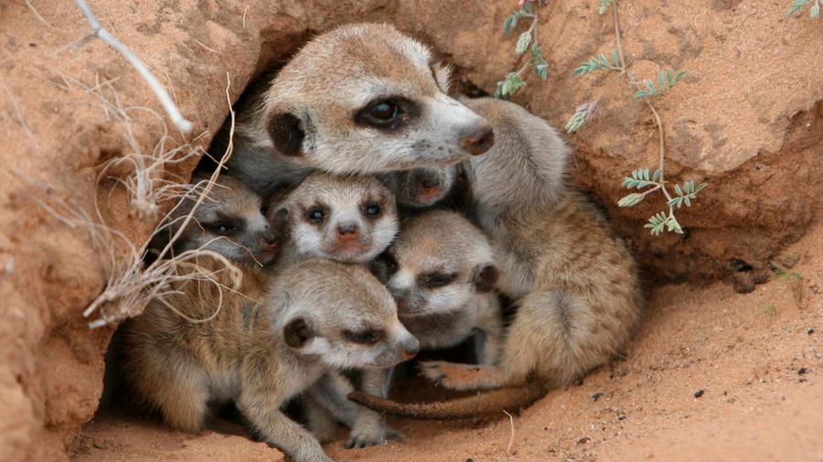 Las madres de casi un centenar de especies también cometen 'infanticidio', cuando los recursos son escasos