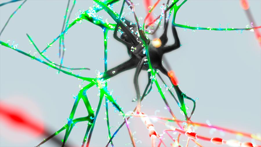 El cerebro piensa en paralelo, como los superordenadores