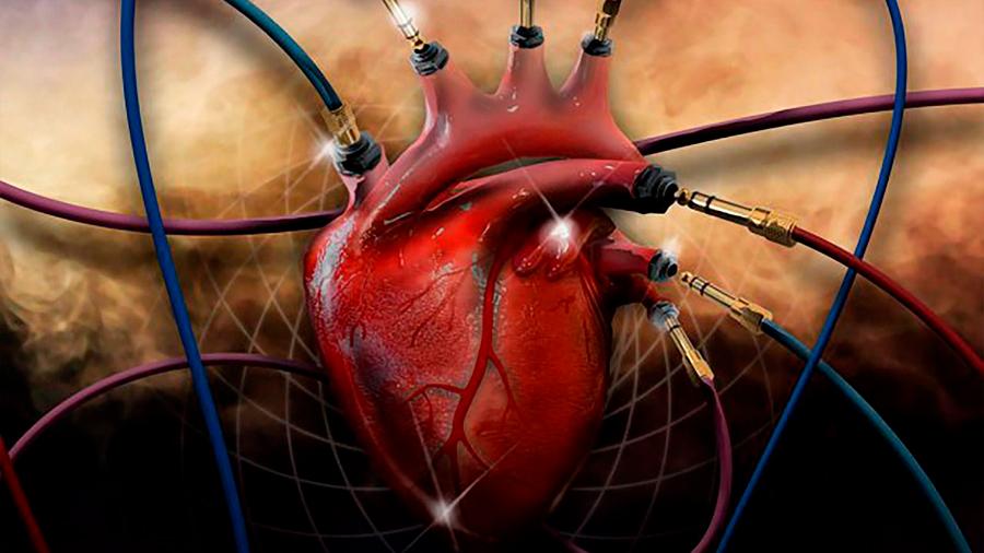 Descubren una nueva célula que puede sanar corazones