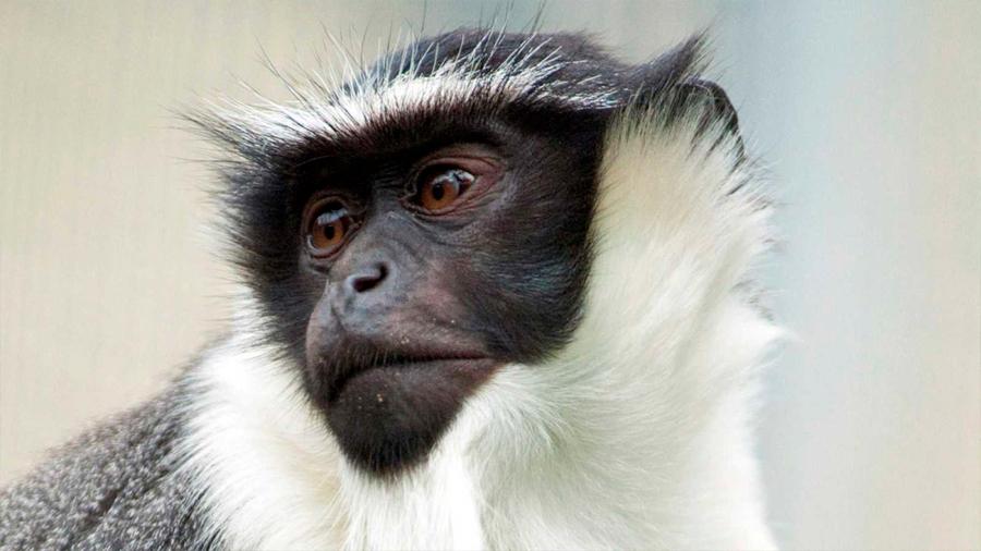 Lista Roja del planeta cifra en más de 28,000 los animales, plantas y hongos en peligro de extinción