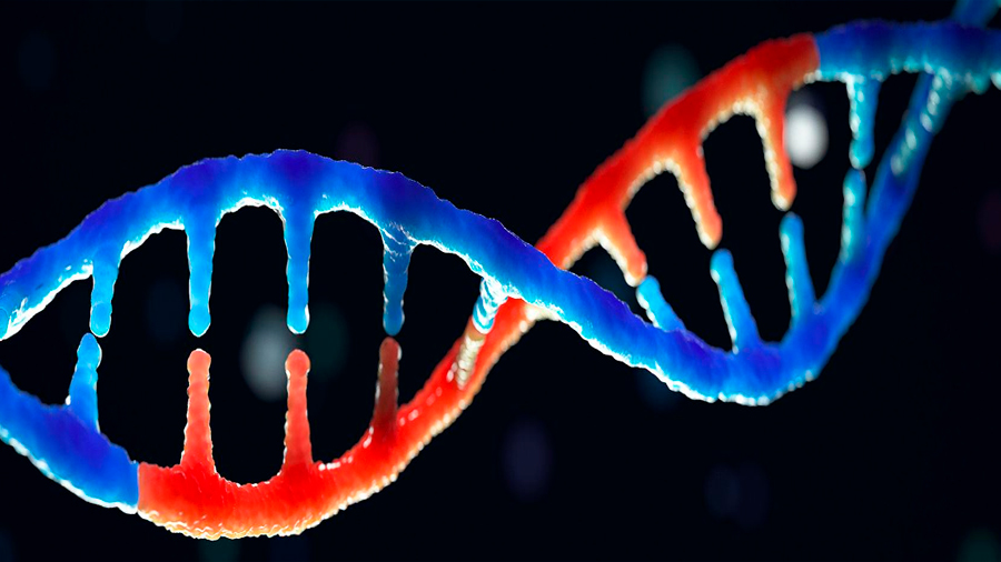 Demuestran que un fragmento de nuestro genoma es capacidad de duplicarse en todo el ADN
