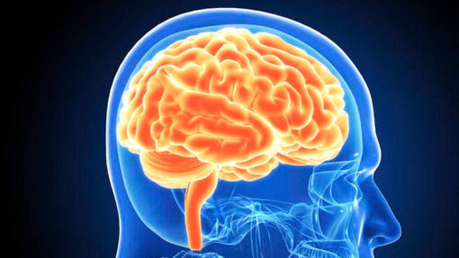 Descubren que muchas actividades atribuidas a la corteza del cerebro se generan en otras estructuras del mismo