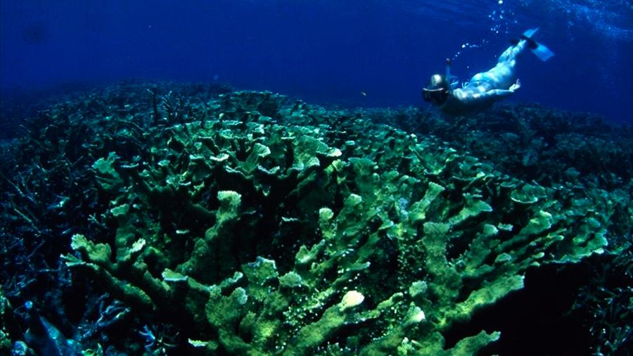 30 años de datos revelan lo que realmente mata a los arrecifes de coral