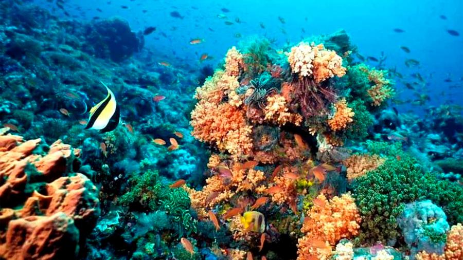 Investigadores descubren 5 arrecifes de coral en el Golfo de México