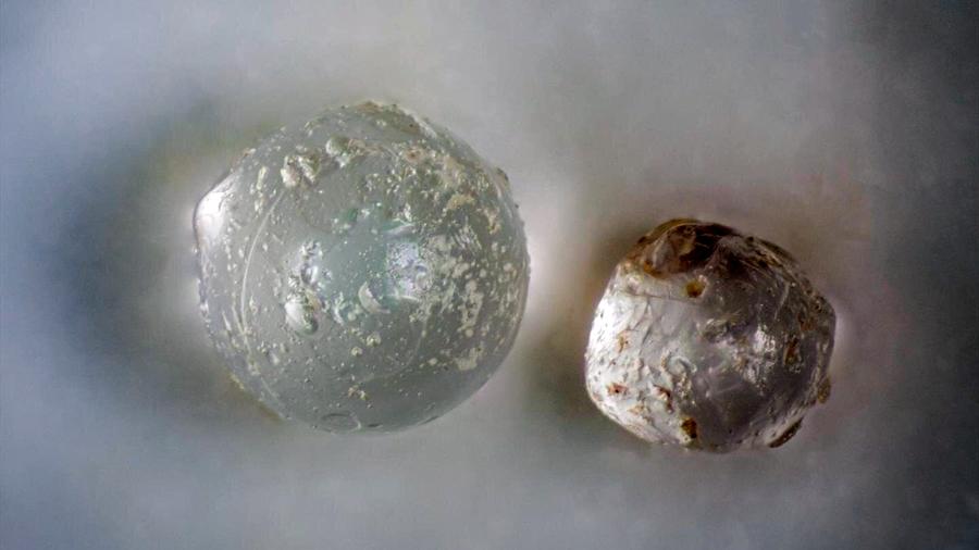Almejas preservan millones de años desechos de impacto de meteoritos
