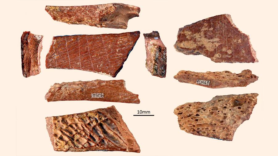 Descubren huesos humanos grabados hace ¡115 mil años!