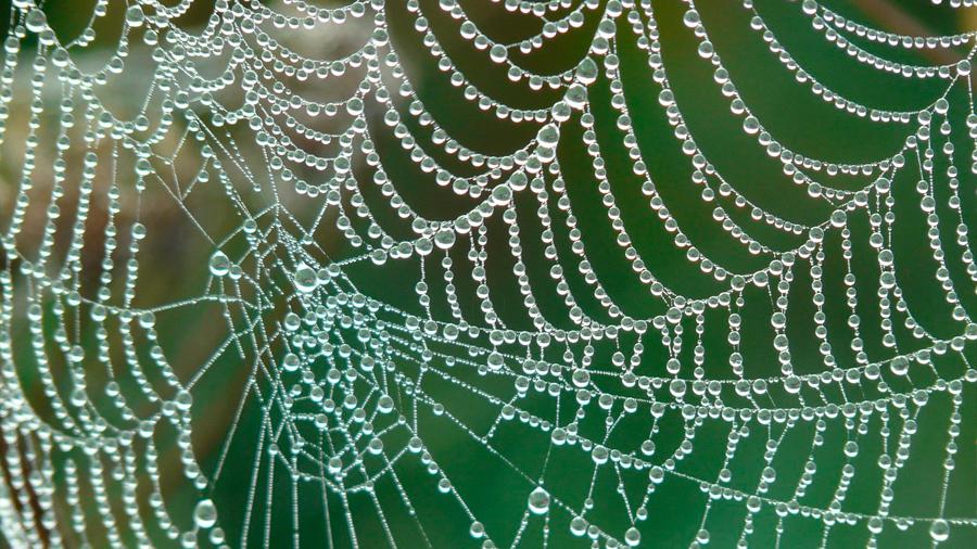 La tela de araña más fuerte que existe contiene una proteína desconocida