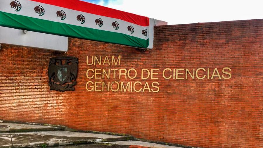 Piden científicos mexicanos al presidente AMLO desoír peticiones de cancelar el aprovechamiento de transgénicos