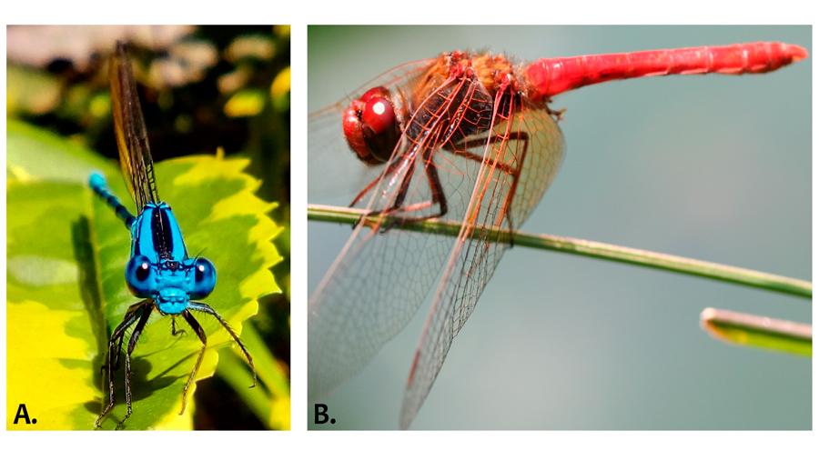 Científicos mexicanos identifican las claves para la supervivencia de los insectos