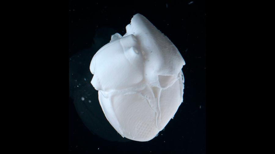 Crean con éxito partes del corazón de colágeno utilizando una bioimpresora 3D