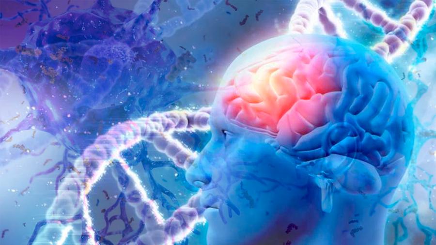 Científicos demuestran que el Alzheimer está asociado con genes implicados en los contactos entre neuronas