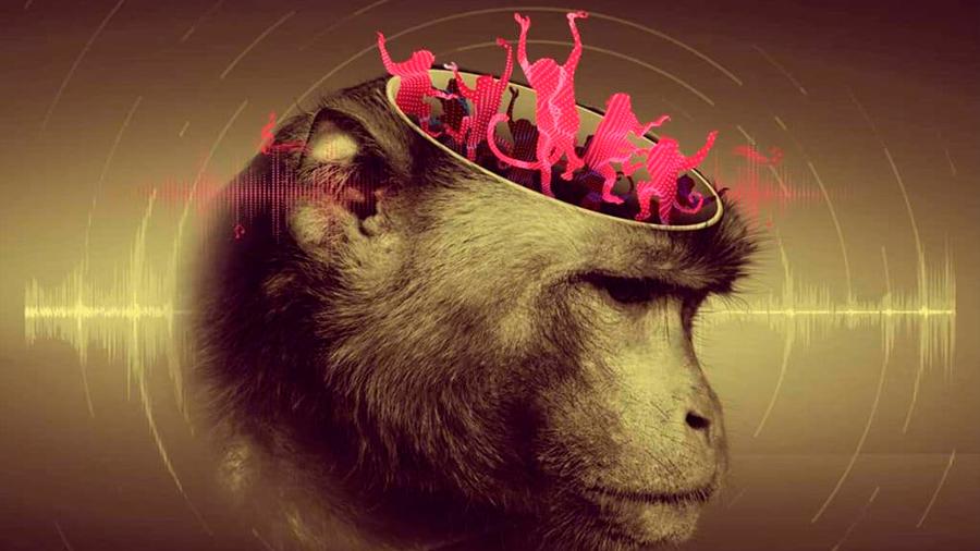 Macacos pueden seguir el ritmo al procesar movimiento. Revela investigación de la UNAM