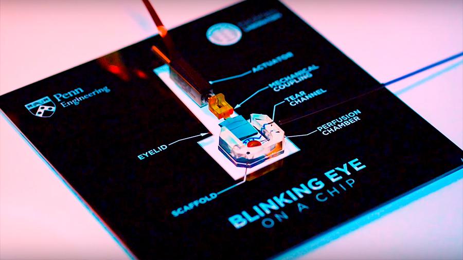 Crean un ojo simulado en 3D a partir de células humanas