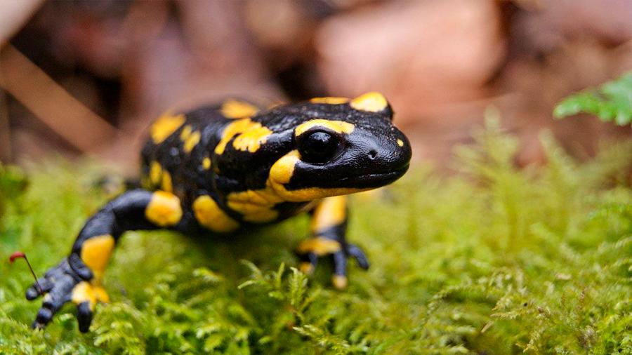 Acuario logra criar dos raros anfibios de Irán y México amenazados