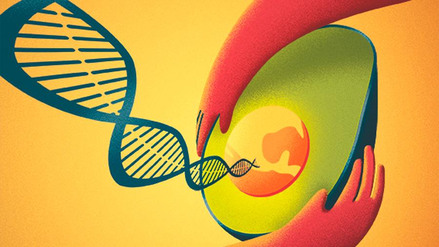 Mexicanos descifran la secuencia genómica del aguacate