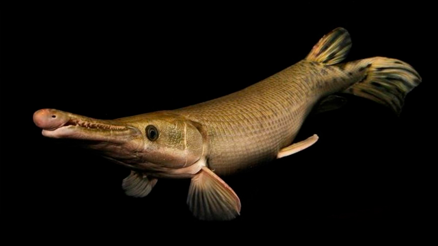 Animales que viven en ríos y lagos disminuyeron 88 en periodo de 42 años: estudio