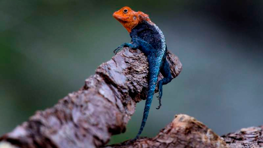 Descubren especies nunca antes vistas en Chimanimani