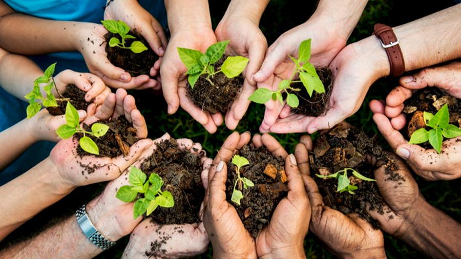 Un estudio urge a plantar un billón de árboles para salvar el planeta