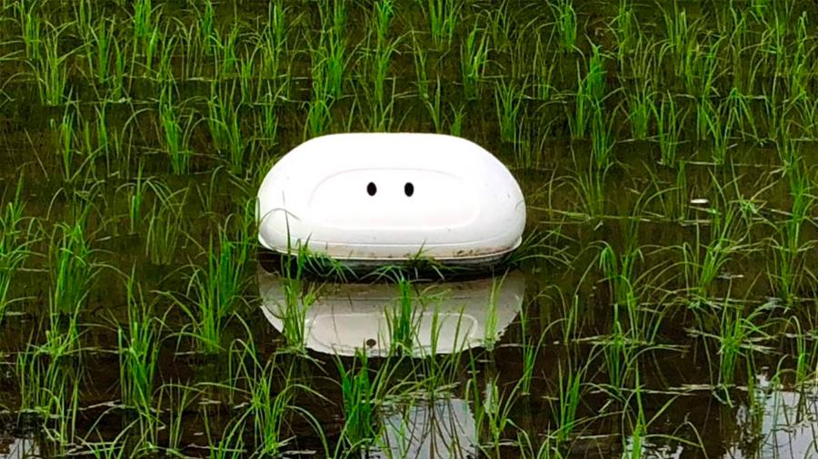 Un pato robot se encarga de cuidar los arrozales