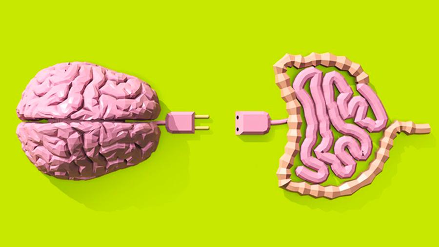 La conexión intestino-cerebro, clave a la hora de engordar por comer en exceso