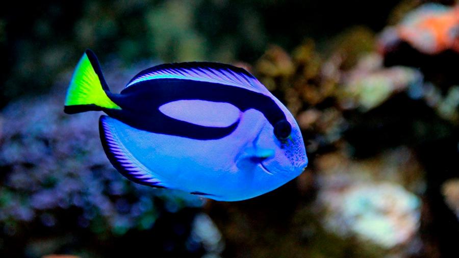 No hay 'efecto Nemo': las películas de animales promueven la conciencia