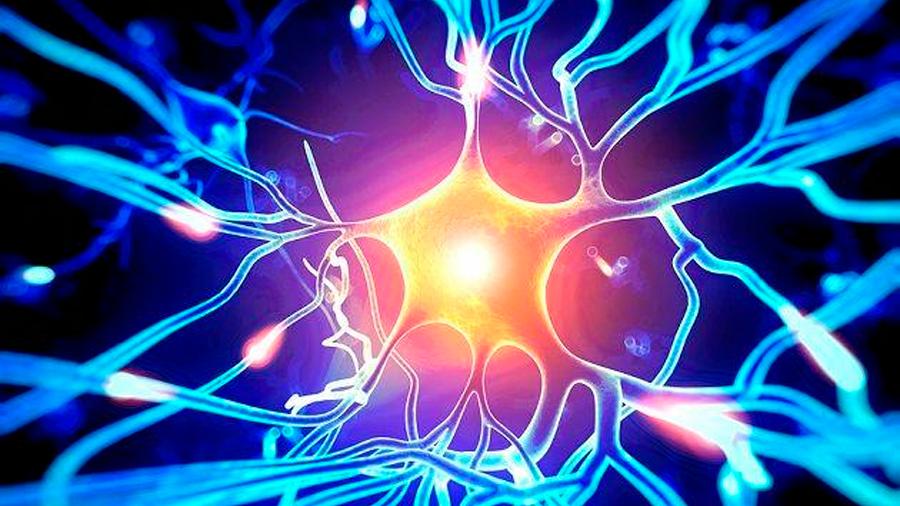 No está claro aún si en la edad adulta nacen nuevas neuronas, refuta científico mexicano