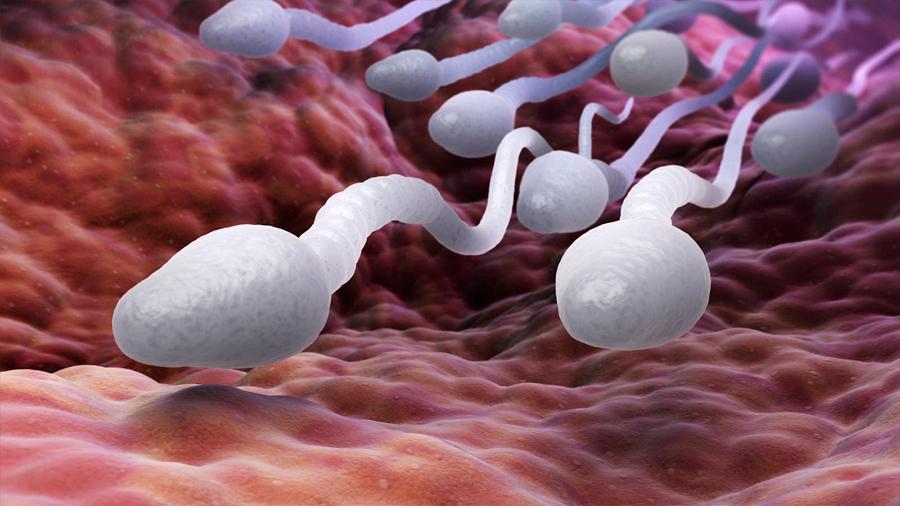 Científicos logran separar los espermatozoides que definen el sexo de los bebés