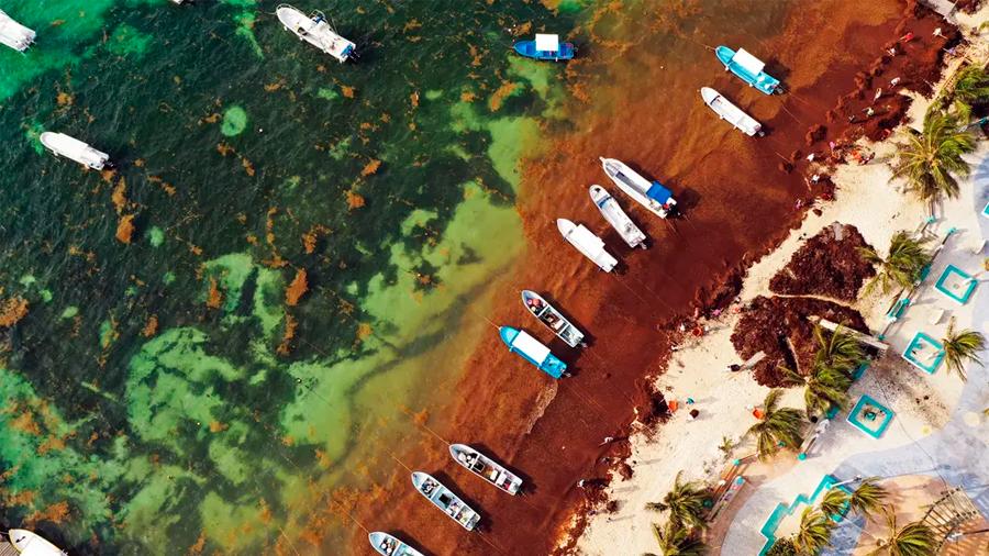 """El sargazo """"es un desastre ecológico de grandes dimensiones"""", dice investigadora de la UNAM"""