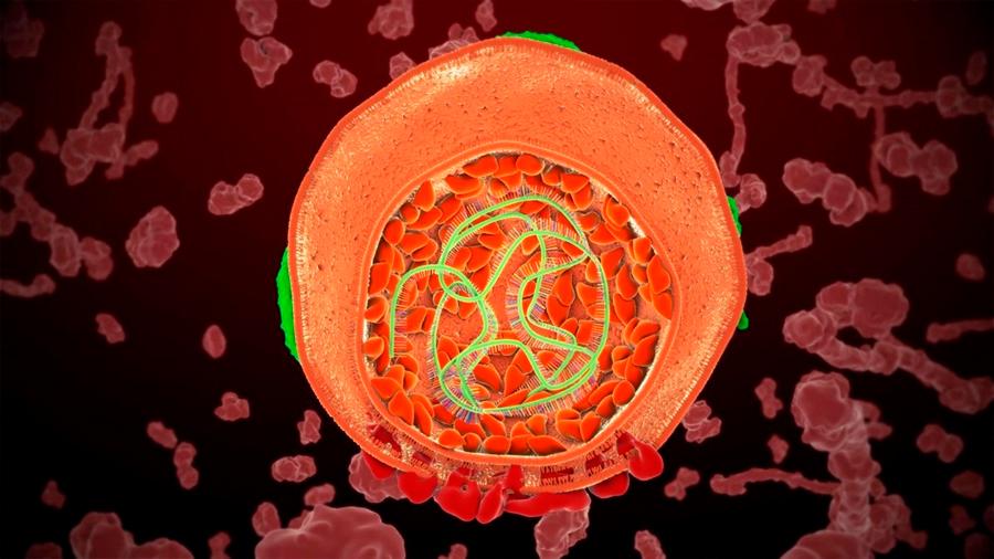 Un nuevo método bioquímico saca a la luz el pasado molecular del ARN
