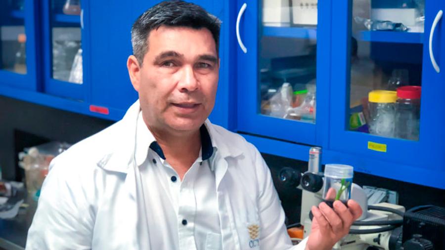 Científico mexicano perfecciona protocolo de propagación de plantas élite de cocotero in vitro