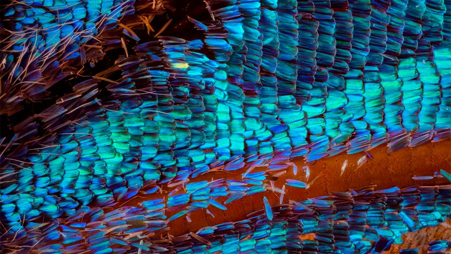 Revolucionario método antifalsificación oculto en las alas de las mariposas