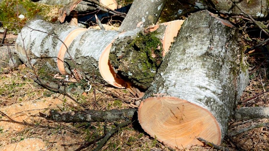 México: dos taladores ilegales fueron sentenciados a plantar 3 mil árboles y limpiar un río
