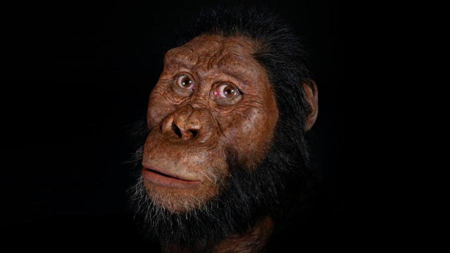 Un cráneo revela el rostro de un ancestro humano que vivió hace 3.8 millones de años