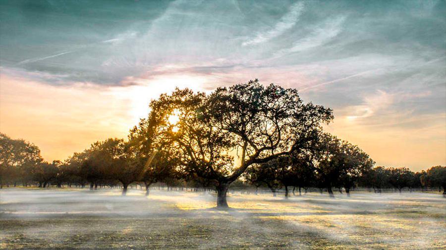Los humanos causaron un cambio ambiental significativo hace unos 3000 años