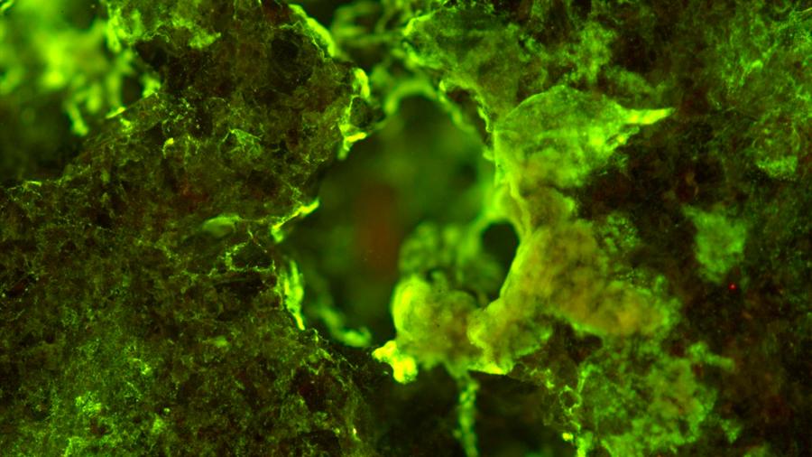Realizan el primer experimento de minería espacial con microbios