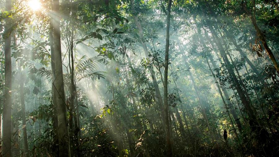 Según investigación, los árboles 'aprenden' a adaptarse al cambio climático