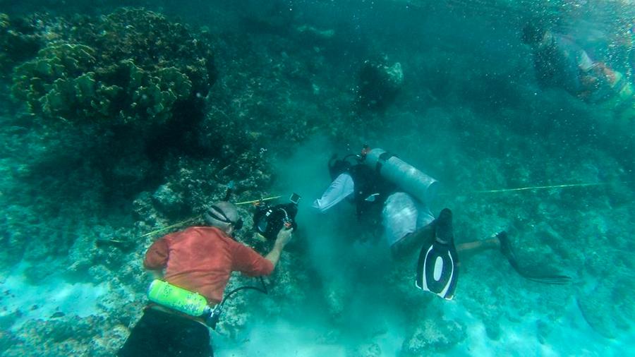 Siembra México corales para rescatar el Sistema Arrecifal Mesoamericano