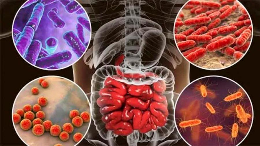 Identifican 8,000 cepas de bacterias en el tracto digestivo humano