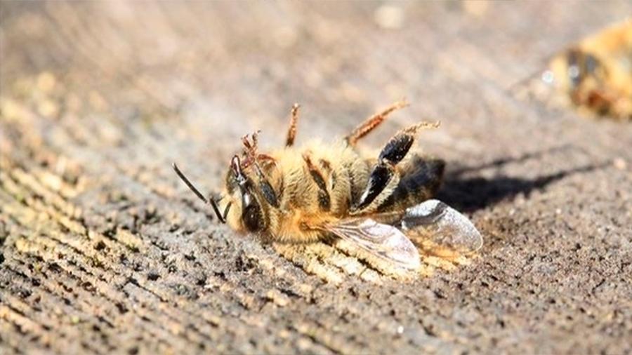 Han muerto 500 millones de abejas en Brasil en solo 3 meses