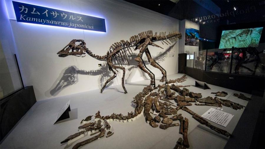 Descubren nueva especie de dinosaurio en Japón
