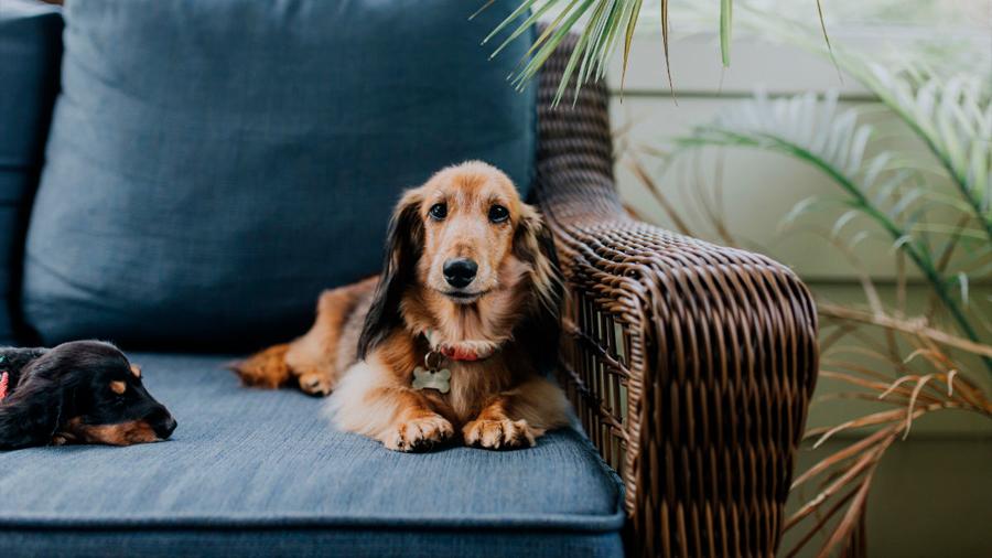 El movimiento antivacunas llega a perros, gatos y conejos: hay 7 millones de mascotas sin vacunar
