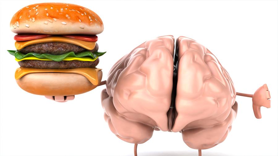Las dietas ricas en grasa cambian el cerebro