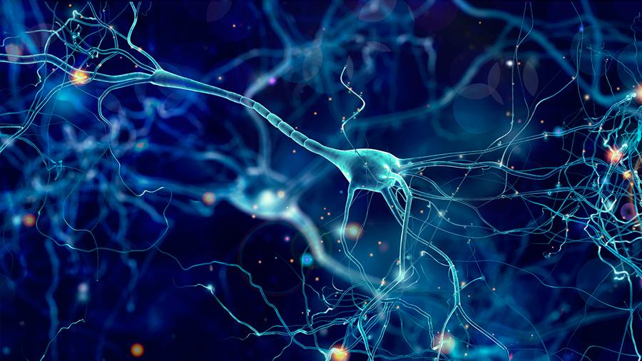 Descrita la huella epigenética que las enfermedades dejan en las neuronas