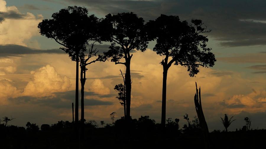 Hallan el árbol más alto del Amazonas: 88 metros