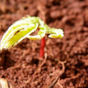 Un informe indica que es posible recuperar 12 millones de hectáreas de vegetación nativa en Brasil